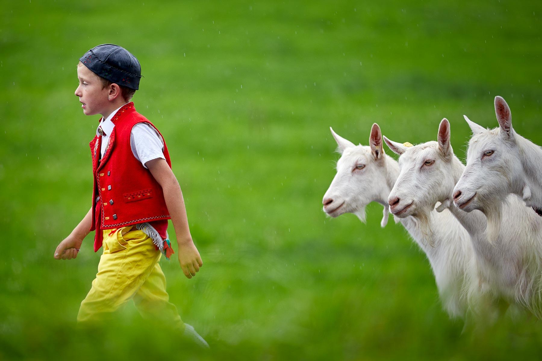 Appenzell Alpabfahrt Geissbub mit 3 Geissen Ziegen