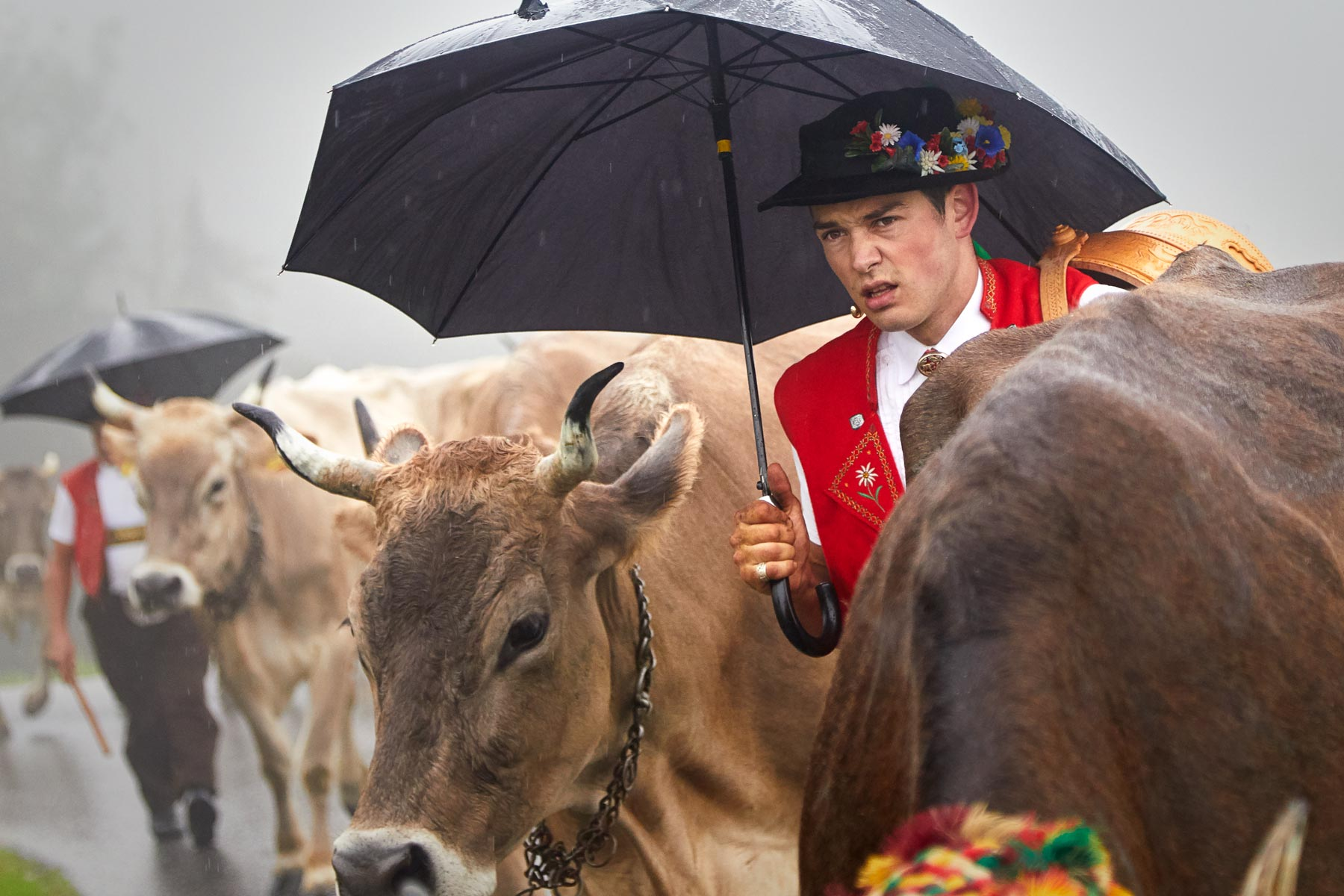 Appenzell Sennen Kühe Alpabfahrt Seealpsee