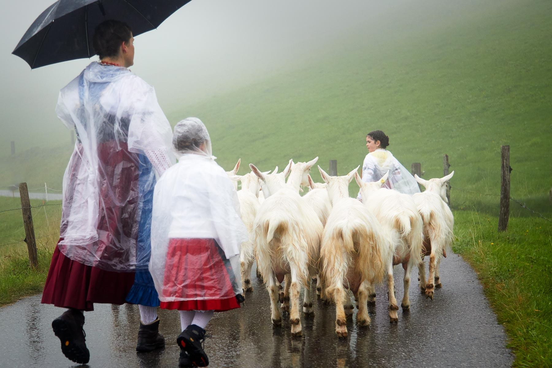 Appenzell Sennen mit Ziegen Alpabfahrt Seealpsee