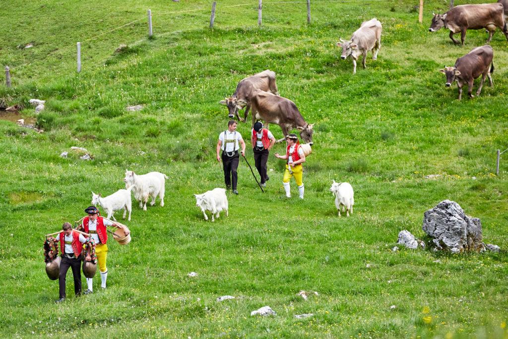 Appenzell Schwizeraelpli Alpaufzug Oeberfahre